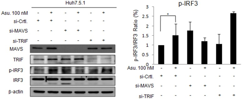 Effects of Asunaprevir on TLR3/RIG-I signaling pathway in Huh. 7.5.1 cells with MAVS and TRIF knockdown . Huh 7.5.1 cells were transfected by siRNA of MAVS and TRIF for 48 h and then treated with asunaprevir for 24 h. The key signaling proteins such as MAVS, TRIF, IRF3, and phosphorylated IRF-3 were determined by immunoblotting analysis (left panel). Immunoblots shown in the figure are representative of three independent experiments. The protein levels phosphorylated IRF-3 over total IRF3 was analyzed with ImageJ software (right panel). Data are mean ± SD from 3 independent tests. Statistical significance was tested by Student's t -test, * P