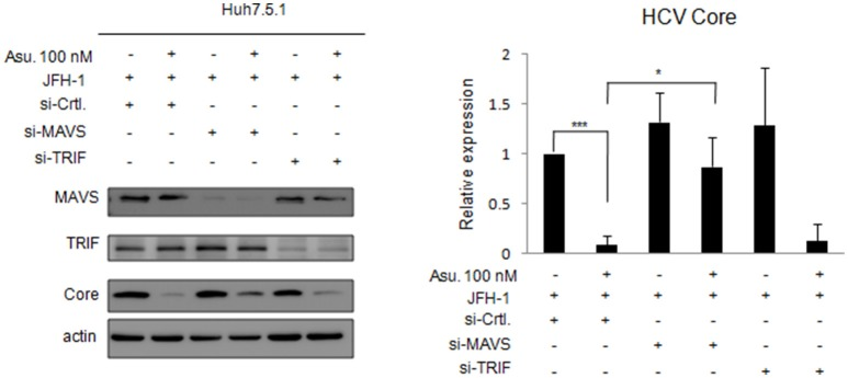 Effects of asunaprevir on replication of <t>HCV</t> in JFH-1- infected . Huh 7.5.1 cells after knockdown of MAVS and <t>TRIF</t> by siRNA. JFH-1-infected Huh 7.5.1 cells were transfected by siRNA of MAVS and TRIF for 48 h and then treated with asunaprevir for 24 h. HCV core protein, MAVS and TRIF were determined by immunoblotting analysis. The HCV core protein levels relative to the β-actin were shown at the bottom of each sample. Immunoblots shown in the figure are representative of three independent experiments. Densitometry was performed with ImageJ software. Data are mean ± SD from 3 independent tests. Statistical significance was tested by Student's t -test, * P