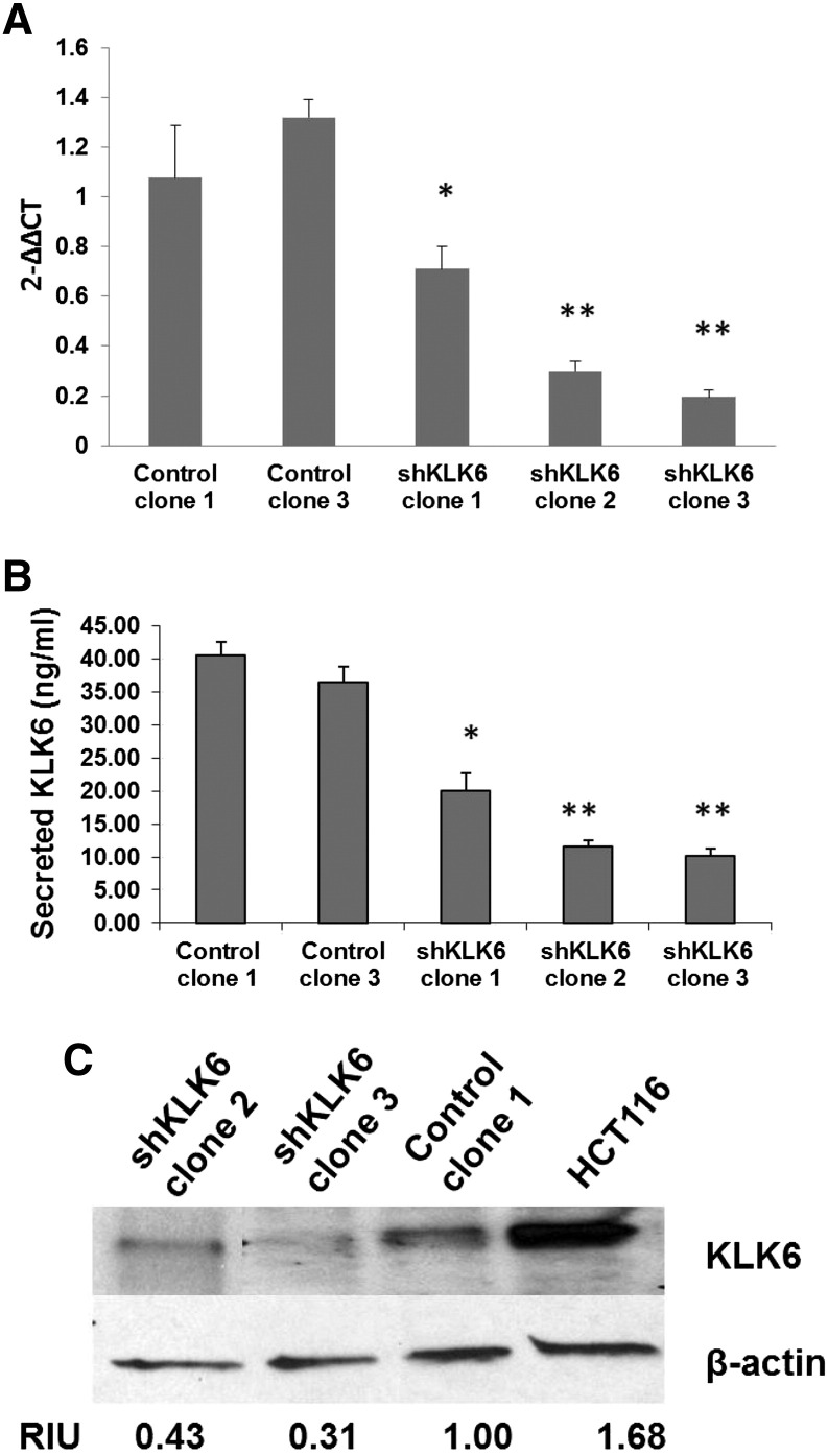 Validation of KLK6 knockdown in HCT116 isogenic stable cell lines. (A) qRT-PCR for KLK6 RNA levels in Control clones 1 and 3 and shKLK6 clones 1, 2, and 3 harvested 48 h after subculture. (B) Levels of secreted KLK6 in conditioned media at 7 days after subculture in Control clones 1 and 3 and shKLK6 clones 1, 2, and 3. * P ≤ .05, Control clones vs. shKLK6 clone 1; ** P