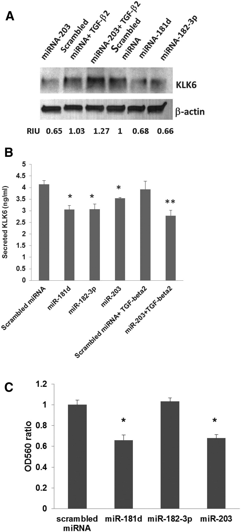 Effect of selected miRNA mimics on KLK6 expression and/or secretion and invasion in HCT116 colon cancer cells. (A) Western blot analysis of KLK6 intracellular protein level in HCT116 cells treated with miR-181d, miR-182 and miR-203 mimics. HCT116 cells were transfected with each of selected miRNA mimics at concentration of 75 nM and cells were processed for Western blot analysis 48 h after transfection. Some cell culture plates were also treated with TGF-β2 ligand (5 ng/ml in a serum-free media) and/or miR-203 mimic. β-actin was used as a loading control. Protein bands quantitation was done using Image J software and presented as Relative Intensity Units (RIU, protein/β-actin ratio normalized to scrambled miRNA sample). Figure is a representative of two independent experiments. (B) Concentration of KLK6 in the conditioned media of HCT116 cells upon treatment with selected miRNA mimics by ELISA * P ≤ .02, ** P = .002 by t -test. (C) Matrigel invasion assay of HCT116 cells treated with individual miRNA mimics. Cells were seeded onto Matrigel coated Boyden chambers 24 h after transfections and allow to invade for 48 hours. Analysis was done as described in Material and Methods section * P ≤ .002 by t -test.