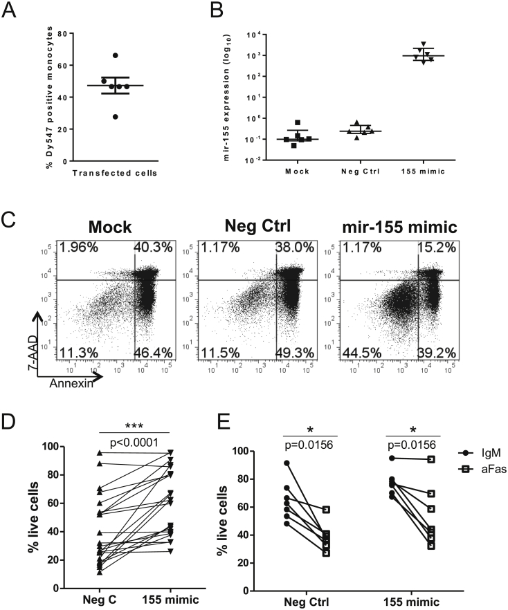 Increased mir-155 promotes monocyte survival . (A) Healthy donor monocytes were transfected with a negative control miRNA mimic conjugated to a fluorescent molecule Dy547. Following incubation for 40 h, Dy547 positive cells were assessed by flow cytometry. (B) Monocytes were transfected with mir-155 mimic or negative control mimic (Neg Ctrl), or with <t>transfection</t> reagent only (mock) and incubated for 40 h. Mature mir-155 levels were measured using a TaqMan microRNA assay. (C, D) Representative plots (C) and cumulative data (D, n = 22) showing healthy donor CD14+ monocyte survival 40 h after transfection with negative control mimic (Neg Ctrl) or mir-155 mimic. (E) Healthy donor monocytes were transfected (n = 7) with Neg Ctrl or mir-155 mimic for 24 h followed by overnight culture with an agonistic anti-Fas antibody (aFas) or the isotype control (IgM) at 200 ng/mL and the percentage of live cells assessed. D and E tested by Wilcoxon matched-pairs test.