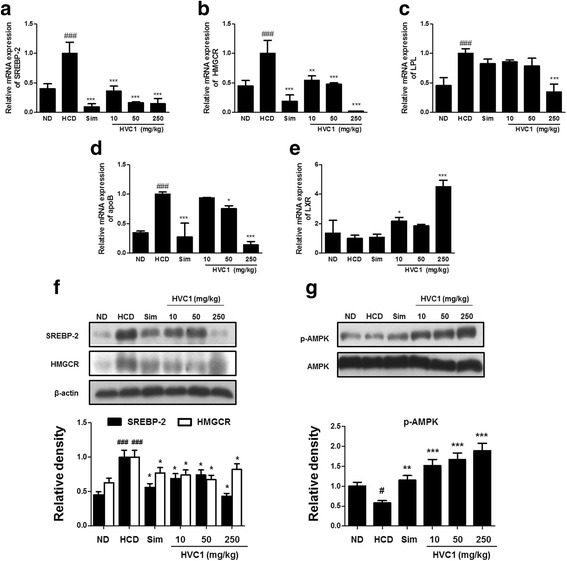 HVC1 regulation of cholesterol metabolism and lipid synthesis in LDLR −/− mice. Total RNA was subjected to real-time PCR as described in the Methods section. Cholesterol and lipid metabolism-related genes mRNA levels were analyzed by real-time PCR analysis. ( a ) SREBP-2, ( b ) HMGCR, ( c ) LPL, ( d ) apoB, and ( e ) LXR. Protein levels of ( f ) SREBP-2, ( g ) HMGCR, (H) p-AMPK, and AMPK in liver tissues were analyzed by western blot. Proteins were determined by western blot assay using specific antibody. β-actin was used as a loading control. Values represent mean ± S.D. of three independent experiments (significant as compared to HCD, * p