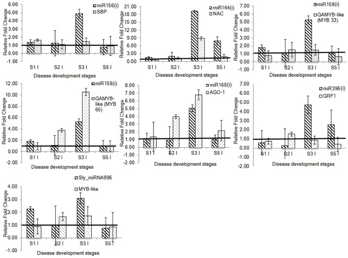 Relative expression analysis of selected conserved and novel tomato miRNAs and their targets through qRT-PCR at four stages of disease development during tomato-RKN susceptible interaction. The correlation in expression profile was deciphered between conserved miRNAs including, miR156(i), miR164(i), miR159(i), miR168(i) and miR396(i) and their target genes, SBP , NAC , GAMYB-like ( MYB33 and MYB65 ), AGO1 and GRF1 , respectively. The correlation in expression profile of novel miRNA, Sly_miRNA996 with its target, MYB-like transcription factor gene was also determined. For qRT-PCR analysis, two technical replicates for each of three biological replicates were used. Fold change was calculated through delta delta Ct method that represents the change in expression level of miRNA and target gene in the infected sample relative to the uninfected control. The fold change of uninfected sample of each stage was taken as 1 and presented with solid line. The data is presented as the mean of three biological replicates ±standard error of the mean. S1-Stage 1, S2-Stage 2, S3-Stage 3, S5-Stage 5, UI-Uninfected sample, I-Infected sample.