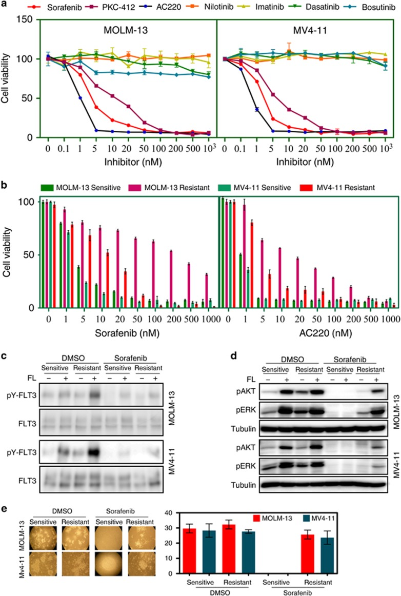 Sorafenib-resistant MV4-11 and MOLM-13 cell lines display resistance to multiple FLT3 inhibitors. ( a ) MOLM-13 and MV4-11 cell lines were treated with an increasing concentration (from 0 to 1000 n M ) of multiple tyrosine kinase inhibitors. Cells were cultured with inhibitors for 46 h followed by PrestoBlue viability analysis. ( b ) Sorafenib-sensitive and -resistant cell lines were treated with increasing concentrations of AC220 and sorafenib for 46 h before processing for PrestoBlue viability assays. ( c ) Sorafenib-sensitive and -resistant MOLM-13 and MV4-11 cells were serum-starved for 4 h in the presence or absence of 100 n M sorafenib before 100 ng/ml FL stimulation for 5 min. Cells were then lysed and immunoprecipitated with an anti-FLT3 antibody. The <t>4G10</t> (anti-phospho-tyrosine) and anti-FLT3 antibodies were used to probe the blots. ( d ) Cell lysates from the experiment described in c were resolved by SDS–PAGE and analyzed by western blotting using anti-phospho AKT, anti-phospho <t>ERK</t> and anti-Tubulin antibodies. ( e ) MOLM-13 and MV4-11 cells were seeded with or without 100 n M sorafenib in semisolid medium and cultured for 7 days.