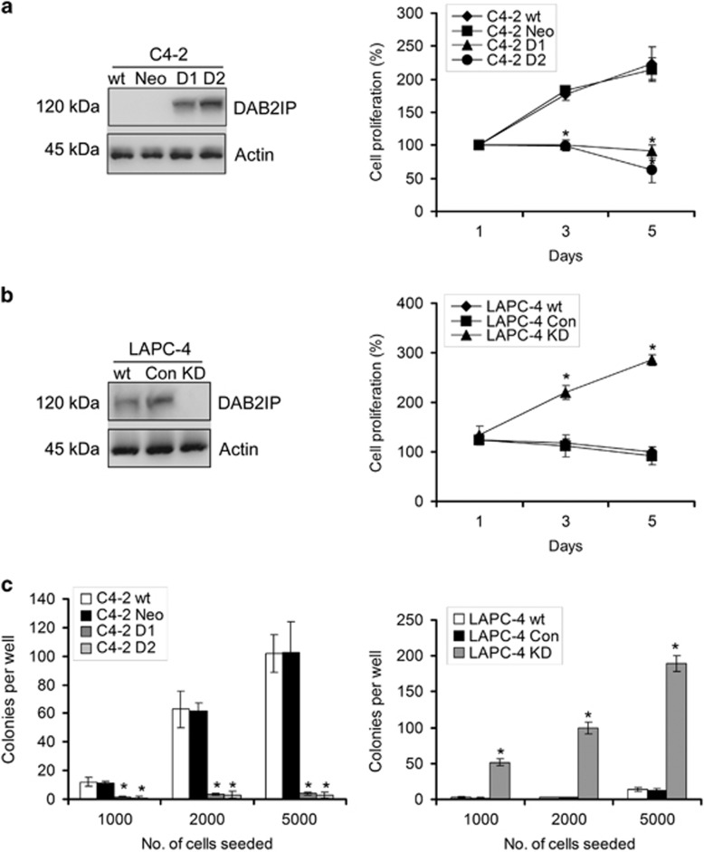 DAB2IP modulates the cell survival of PCa cells under androgen-depleted condition. ( a – c ) C4-2 and LAPC-4 sublines were cultured in Phenol Red-free RPMI-1640+5% CS-FBS and cell growth was determined by MTT or colony formation assay; data (means±S.E.M.) were obtained from three independent experiments; * P