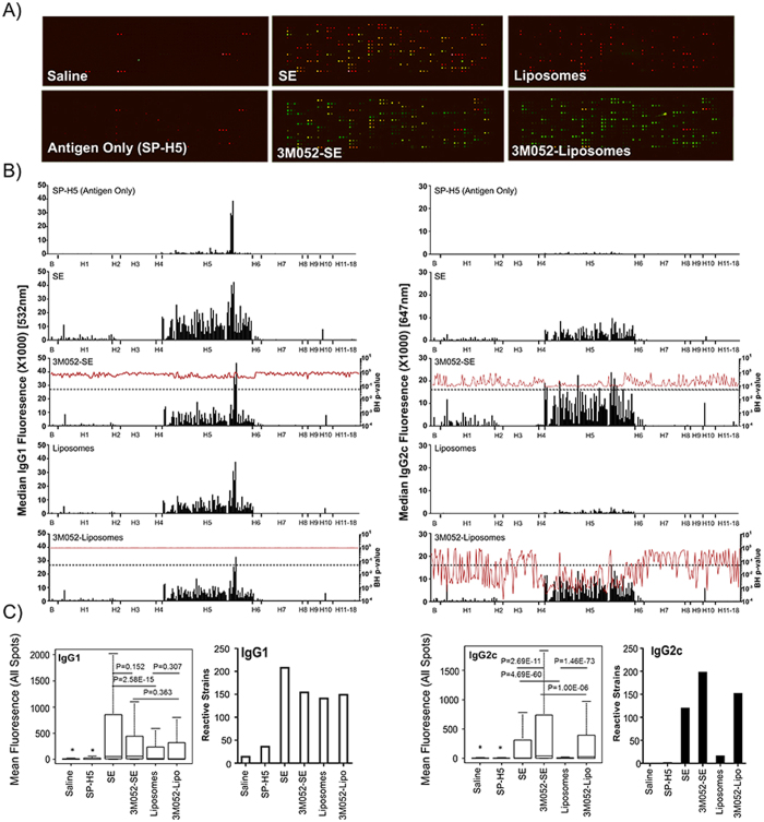 HA Subtype Binding Profile Analysis of Sera From 3M-052 Immunized Mice. Mice were immunized twice with split H5N1 vaccine (SP-H5, A/VN/1203/04, Sanofi Pasteur) 28 days apart (D0, D28) in combination with adjuvants as indicated. Adjuvant dose was 1 or 2 μg 3M-052 in SE or liposomes, respectively. Sera was collected from mice (n = 7/group) at D63, and analyzed using a high density HA array. IgG1 and IgG2 subtype antibodies were simultaneously detected using a two-color microarray scanner ( A ). Global binding profiles of serum from mice immunized with different adjuvants were determined by plotting background subtracted median fluorescence values for all HA proteins in the array. The ability of 3M-052 to significantly increase antibody titer, indicated by an increase in median fluorescence, was determined by comparison of fluorescence levels observed within a formulation (SE, Liposomes) with and without 3M-052, and calculation of P-values corrected for false discovery rate (FDR) using the Benjamini Hochenberg method (BHp-value) ( B ). BH p-values