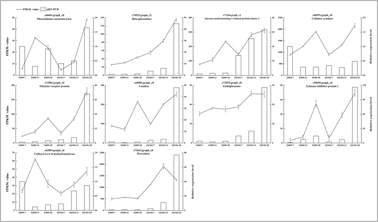 qRT-PCR validations of RNA-seq data. Expression profiles of the selected genes as determined by RNA-seq and qRT-PCR. Data were collected from high seed shattering genotype XH09 and low seed shattering genotype ZhN03 at 7, 21 and 28 days after heading. The left-hand y-axis indicates FPKM value. The right-hand y-axis indicates relative expression level. Bars indicate the mean values ± standard deviation