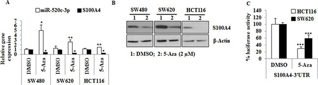 miR-520c regulatory region is hypermethylated in CRC cell lines and treatment with 5-Aza induces the expression of miR-520c-3p and downregulates S100A4 expression ( A , B ) SW480, SW620 and HCT116 cells were treated with 5-Aza (2 mM) for 3 days. qRT-PCR and Western blots were performed to analyze the impact of 5-Aza treatment on miR-520c-3p and S100A4 expression. RNUB6, RPII and β-actin served as internal controls. ( C ) HCT116 and SW620 cells transfected with the wild type S100A4-3′-UTR were treated with 5-Aza (2 μM) for 24 h and the luciferase activity was measured. Renilla luciferase activity was used for normalization. Percentage luciferase activity was significantly reduced after 5-Aza. ( *p