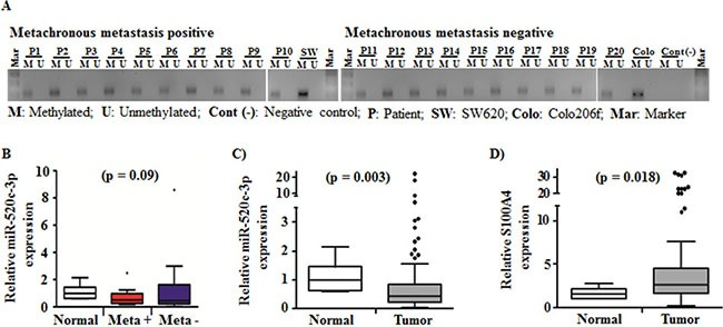 Methylation status of the <t>miR-520c</t> regulatory region and expression of miR-520c-3p and its target S100A4 in a cohort of CRC tumor specimens ( A ) Methylation specific <t>PCR</t> products of metachronous metastasis positive and metachronous negative CRC tumor specimens were analyzed using agarose gel electrophoresis. The miR-520c regulatory element was methylated in all specimens. The two cell lines SW620 and Colo206f served as internal controls. ( B ) miR-520c-3p expression in metachronous metastasis positive ( n = 10) and negative ( n = 10) CRC tumor specimens in comparison to representative normal mucosa were quantified using qRT-PCR. ( C , D ) miR-520c-3p and S100A4 expression in CRC tumor specimens in comparison to representative normal mucosa were quantified using qRT-PCR. RPII and RNUB6 served as internal controls.