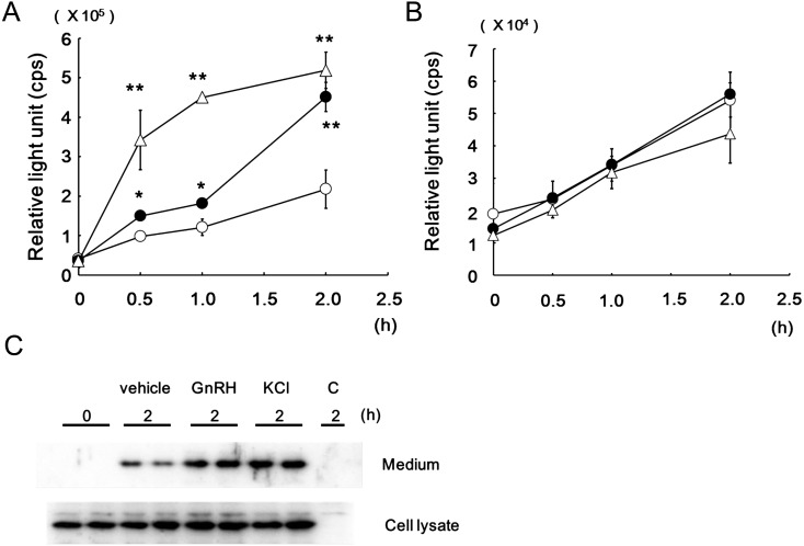 """Time-dependent increment of Gluc activity in the LβT2-cultured medium (A) and NIH3T3-cultured medium (B), and Gluc protein secretion in LβT2-cultured medium (C). The cells were transfected with pCMV-Gluc2. (A and B) Gluc-expressing cells were incubated for the indicated times without treatment (open circle), and in the presence of 10 nM GnRH (closed circle), or 50 mM KCl (open triangle). Gluc activity in the medium at each time point was measured as described in """"Materials and Methods"""". The asterisks indicate that the Gluc activities are significantly different from that in the absence of agents, * P"""