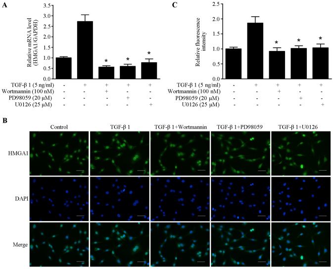 TGF-β1 induces HMGA1 expression through PI3K signaling and ERK signaling in SW579 cells. (A) The effects of wortmannin, PD98059 and U0126 on the mRNA expression of HMGA1 induced by treatment with 5 ng/ml of TGF-β1 in SW579 cells. (B and C) The effects of wortmannin, PD98059 and U0126 on the expression of HMGA1 induced by treatment 5 ng/ml with TGF-β1 in SW579 cells. Fluorescence were gathered and analyzed with a fluorescence microscope (Olympus). * P