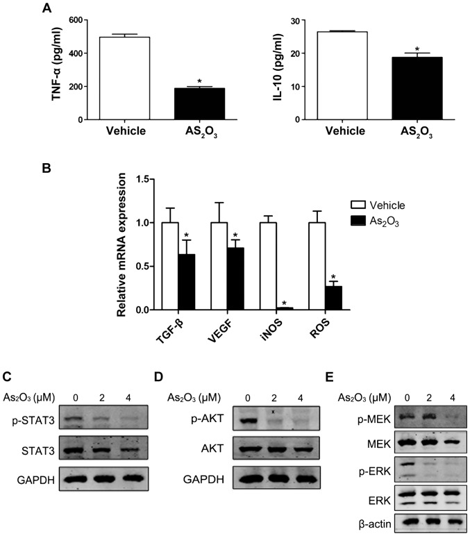 ATO regulates the function of MDSCs through JAK/STAT, PI3K/AKT and MEK/ERK signaling pathway in vitro . (A) The concentration of TNF-α and IL-10 in the supernatant from the MDSCs treated with medium alone (control) or ATO (2 µM) for 120 h was measured by ELISA (*P
