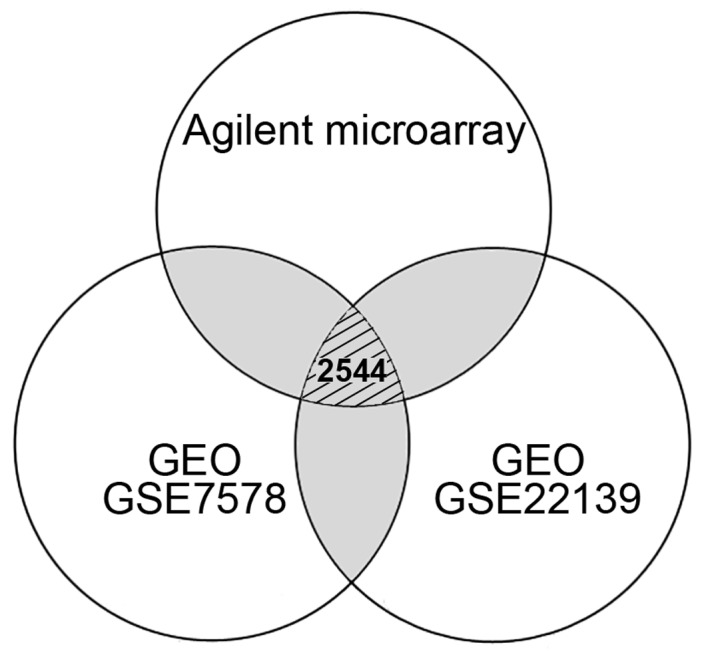 Venn diagram indicating the number of differentially expressed genes in medulloblastoma from the comparisons of different microarray systems. A total of 4,596 (1,656 up- and 2,940 downregulated) genes from Agilent microarray system, 12,262 (8,306 up- and 3,956 downregulated) genes from GEO GSE7578, and 14,257 (11,274 up- and 2,983 downregulated) genes from GEO GSE22139 were respectively selected according to their differential expression. Gray regions indicated the genes repeated in different experiments. Only 2,544 genes with consistent expression level differences were determined by comparing the data obtained from Agilent and Affymetrix (GEO GSE7578 and GSE22139) microarrays. GEO, Gene Expression Omnibus; GSE, GEO series.
