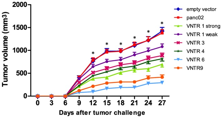 Effect of pVAX1-MUC1-VNTR n DNA vaccine immunization on panc02-MUC1 tumor growth in mice. The pVAX1-MUC1-VNTR 6 DNA vaccine showed a stronger inhibitory effect on panc02-MUC1 tumor growth in vivo compared with the strong pVAX1-MUC1-VNTR1, VNTR 3 , VNTR 4 and VNTR 9 groups. pVAX1-MUC1-VNTR n DNA vaccines showed no evident inhibitory effect on panc02 tumor cells, indicating MUC1 specificity. *P