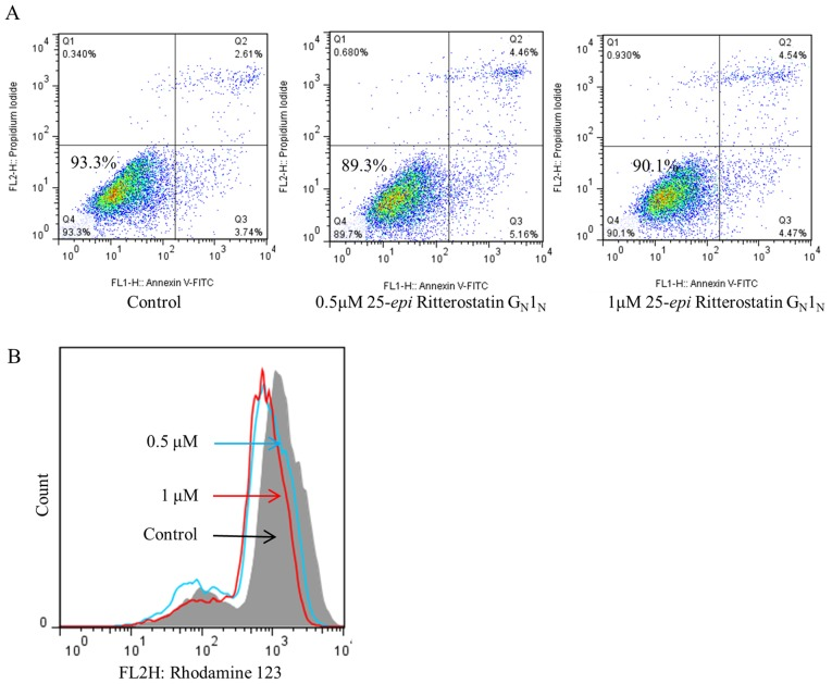Normal melanocytes exhibit limited sensitivity to 25- epi Ritterostatin G N 1 N . (A) Percentage of viable normal melanocytes after treatment with 25- epi Ritterostatin G N 1 N , according to Annexin V-FITC/ propidium iodide staining and flow cytometry analysis. (B) Rhodamine 123 staining results showing the mitochondrial membrane potential change in normal melanocytes treated with 0.5 or 1 µ M 25- epi Ritterostatin G N 1 N for 48 h.
