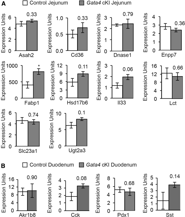 Expression of jejunal and duodenal transcripts is unchanged in Gata4 cKI animals. ( A ) qRT-PCR was used to determine transcript abundance of the 10 jejunal-enriched transcripts, identified as having enriched GATA4 binding by bio-ChIP–PCR ( Figure 7 ) in jejunal epithelial cells from control and Gata4 cKI mice. ( B ) qRT-PCR was used to determine transcript abundance of 4 duodenal transcripts in duodenal epithelial cells from control and Gata4 cKI mice. ( A and B ) Glyceraldehyde-3-phosphate dehydrogenase was used for normalization. Expression of each gene was assayed in at least 3 independent experiments (n = 3 per genotype). Error bars represent SEM. P values were determined by 2-sample Student t test.