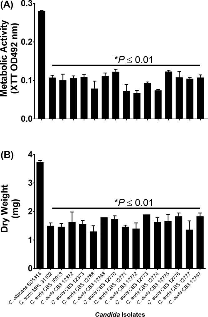 Quantification of biofilms formed by C. albicans and C. auris strains. The metabolic activity (A) and dry weight (B) of the biofilms formed by C. albicans , C. auris MRL 31102 (control), and 14 CBS C. auris strains are shown. *, P value compared to the results for C. albicans . A P value of