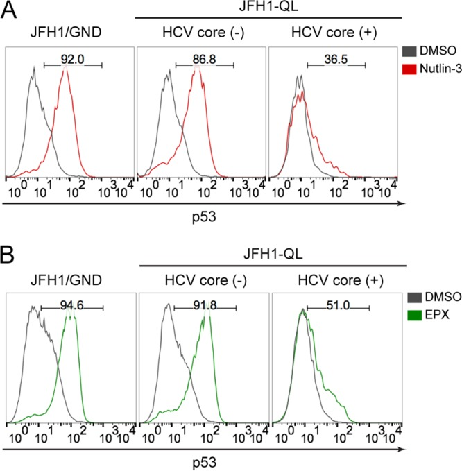 HCV inhibition of p53 activation is independent of MDM2 and proteasome activity. (A) p53 accumulation in HCV core (-) versus HCV core (+) populations of HepG2/miR-122 cells electroporated with indicated HCV RNA genomes and after 72 h, treated with 10 μM MDM2 inhibitor (nutlin-3) or DMSO for an additional 6 h. The numbers indicate the percentages of p53-positive cells following nutlin-3 treatment. (B) p53 accumulation in HCV core (-) versus HCV core (+) populations treated with 250 nM proteasome inhibitor (epoxomycin [EPX]) or DMSO for 6 h. The numbers indicate the percentages of p53-positive cells following EPX treatment.