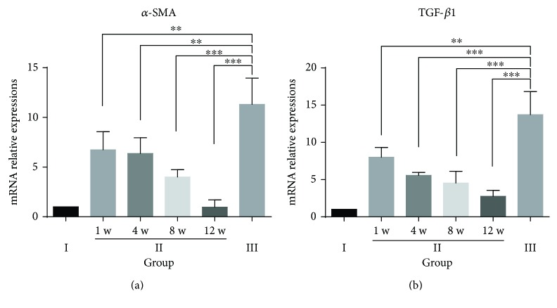 Relative mRNA expression levels of α -SMA and TGF- β 1 in the different experimental groups. Quantitative real-time polymerase chain reaction (qRT-PCR) results from n = 6 rats from each group at each time point. The tests were performed in triplicate. The data are presented as the mean ± SD (error bars) and were statistically analyzed using Student's t -test. ∗∗ p