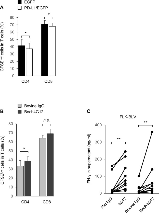 Activation of T-cell proliferation and interferon-γ (IFN-γ) production by Boch4G12. (A and B) The proliferation of CD4 + and CD8 + cells in purified bovine CD3 + T cells. Peripheral blood mononuclear cells (PBMCs) isolated from healthy cattle were labeled with carboxyfluorescein diacetate succinimidyl ester (CFSE), stimulated with 1 μg/ml anti-CD3 and anti-CD28 antibodies, and then cultured for 3 days with enhanced green fluorescent protein (EGFP) cells or programmed death-ligand 1 (PD-L1)/EGFP cells without antibodies (A), or PD-L1/EGFP cells in the presence of 10 μg/ml bovine IgG control or Boch4G12 (B). n = 10 and 6, respectively; A P -value less than 0.05 was considered statistically significant. *, P