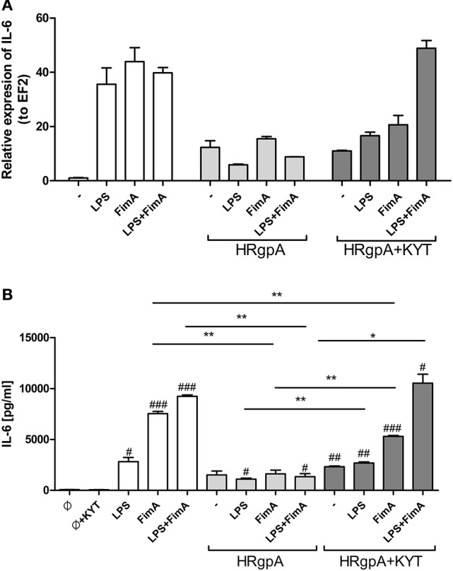 The role of gingipains in the regulation of cell responses to LPS and fimbriae . Monocyte-derived dendritic cells (moDC) were untreated or exposed to P. gingivalis LPS (2.5 μg/ml), FimA (10 μg/ml) or mixed LPS with FimA. Additionally, cells were co-stimulated with HRgpA (2 nM) in the presence or absence of specific protease inhibitors (KYT-1 and KYT-36, each at a concentration of 1 μM). Four hours after stimulation, culture media were collected and cells were lysed with TRIzol. RNA was isolated and reverse transcriptase PCR was performed. Relative expression of the cytokine gene IL-6 to the reference house-keeping gene EF2 was measured by Real-Time PCR. Data show representative fold increase in expression compared to control levels, which were arbitrarily set at 1 (A) . Concentration of IL-6 in collected medium was evaluated by standard ELISA method (B) ; Data are presented as mean ± standard deviation of duplicates from three independent assays and were analyzed with a Student's t -test (# P