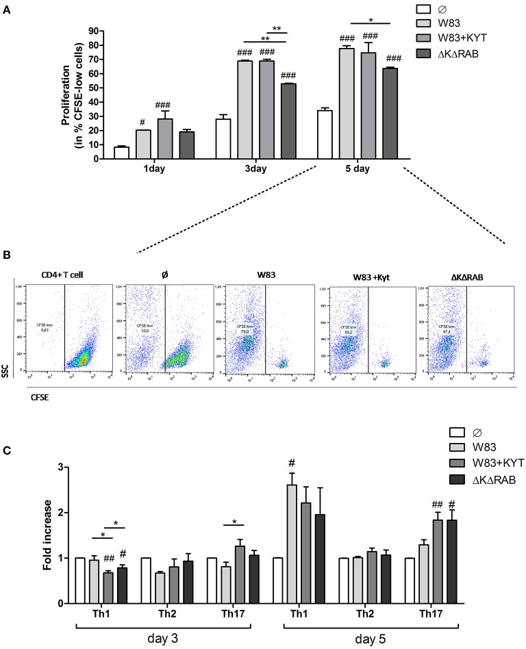 Proliferation and differentiation of CD4 + T cells mediated by gingipains from P. <t>gingivalis</t> . Monocyte-derived dendritic cells (moDC) were untreated or exposed to P. gingivalis W83 in the presence/absence of specific protease inhibitors (KYT-1 and KYT-36, each at a concentration of 1 μM) or the isogenic gingipain-null mutant ΔKΔRAB for 6 h at MOI (multiplicity of infection) 1:50. Naive CD4 + T cells stained with CFSE were added and co-stimulated for 5 days. Proliferation of lymphocytes was measured at day 1, 3, and 5. (A) Completed results of proliferation on day 1, 3, and 5 as a percentage of CFSE low cells. Data are presented as a mean ± standard deviation of assays performed in triplicate using four independent donors, and were analyzed with a two way ANOVA with the Bonferoni's posttest correction (# P
