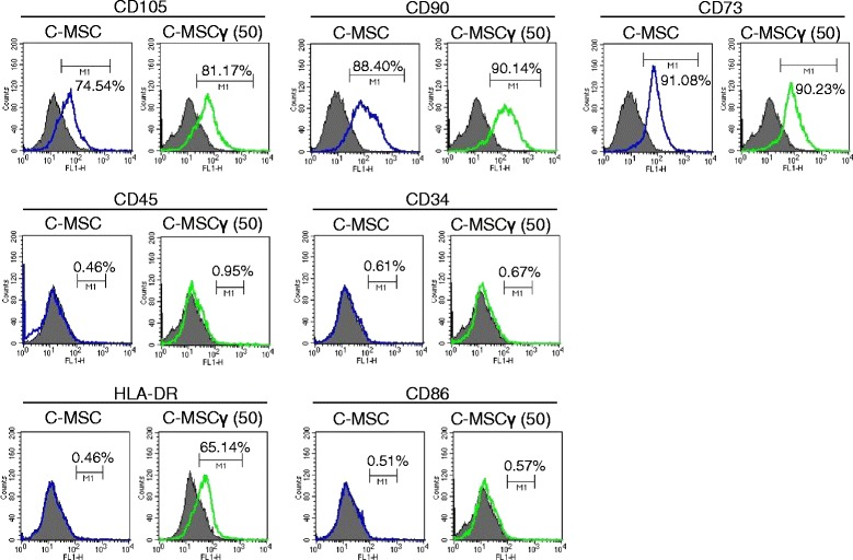 """Phenotype profiles of C-MSC and C-MSCγ. Cell surface marker expression levels were monitored by flow cytometry, as described in the """" Methods """" section. The open histogram with blue or green lines indicates CD105-, CD90-, CD73-, CD34-, CD45-, HLA-DR-, or CD86-positive cells. The IgG control is shown with a solid histogram. CD cluster of differentiation, C-MSC clumps of a mesenchymal stem cell/extracellular matrix complex cultured in growth medium for 3 days, C-MSCγ (50) C-MSC stimulated with 50 ng/mL IFN-γ for 24 h before the end of the culture period, HLA human leukocyte antigens"""