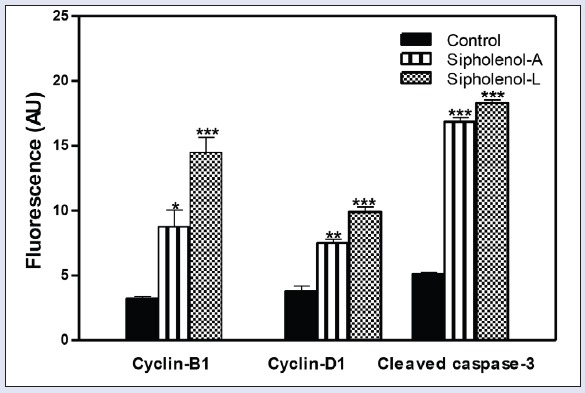 Quantitation of fluorescence intensity sipholenol-A and sipholenol-L on cylin-B1, cyclin-D1, and cleaved caspase-3. AU: arbitrary units. *denotes significantly different from control at P
