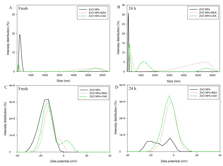 The hydrodynamic size ( A , B ) and zeta potential ( C , D ) of freshly prepared ( A , C ) and aged for 24 h ( B , D ) ZnO NPs (code: XFI06) suspended in distilled and deionized water (DDW), 0.5% BSA, or 200 µM α-linolenic acid (LNA; complexed to BSA; referred as LNA). The sizes smaller than 50 nm are not shown in this figure.