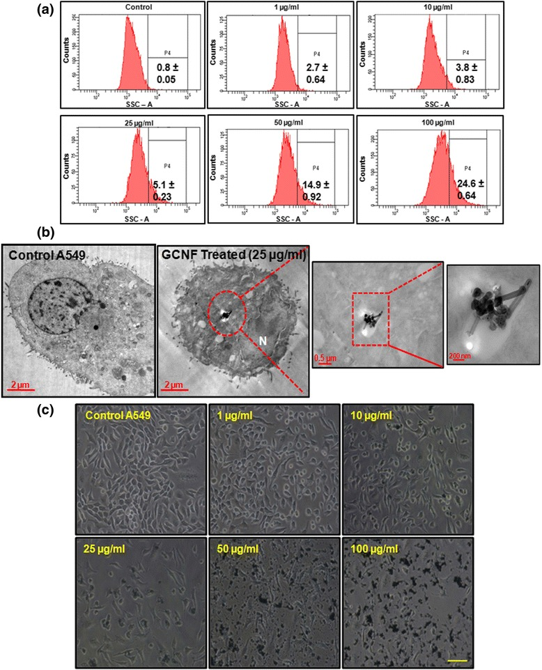 Representative flow cytograms ( a ) and corresponding TEM images ( b ) depicting cellular internalization of GCNF in A549 cells. In TEM images, red enclosure denotes presence of GCNF in membranous structure. ( c ) Phase contrast photomicrographs of A549 cells showing their cellular morphology. For flow cytometry, three independent experiments were performed and data represents mean ± SE value. * p