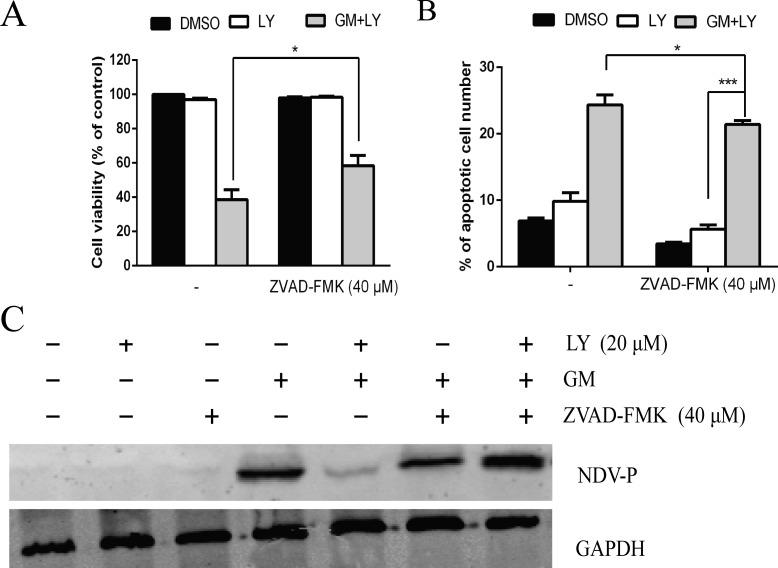 PI3K signaling pathway and apoptosis are simultaneously involved in NDV replication CEF cells were preincubated with the pan caspase inhibitor ZVAD-FMK (40 μM) for 1 h, with or without PI3K inhibitor LY294002 (LY) (20 μM) prior to infection with NDV-GM at an MOI of 1 for 48 h. ( A ) Cell death was analyzed under microscope and by MTT assay. ( B ) The number of apoptotic cells was calculated by flow cytometry using Annexin V-FITC/PI Apoptosis Detection Kit. * p