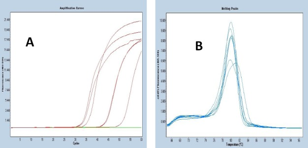 Examples of amplification curves (A) and melt curves (B) obtained from the amplification of the IL-4 cDNA from activated PBMCs exposed to the medicinal plant extracts from Combretum hereroense and Canthium mundianum .