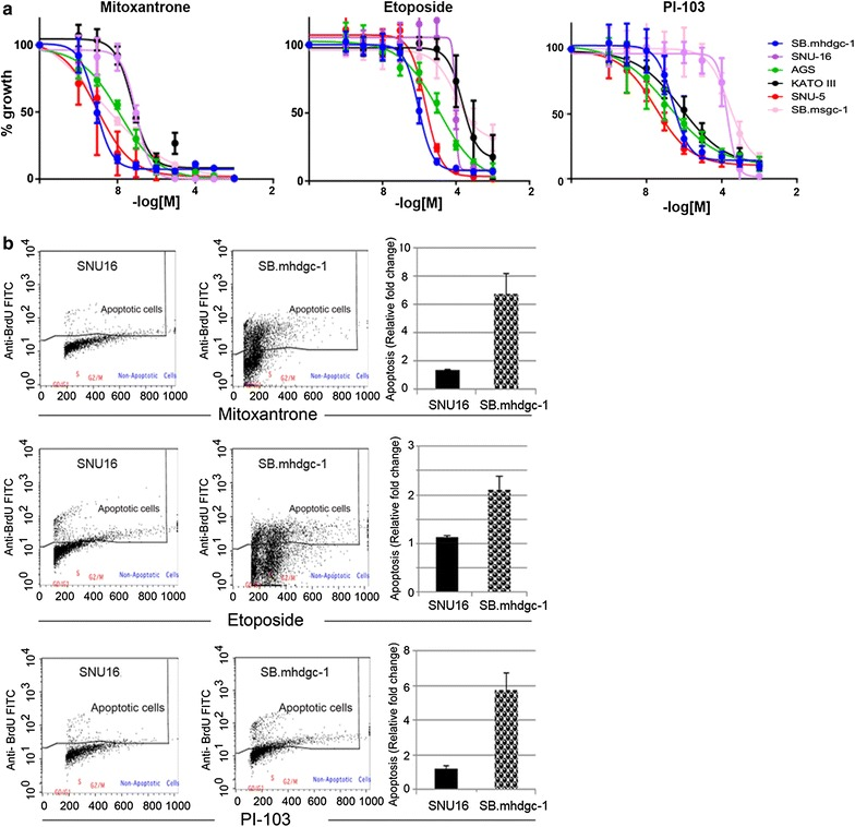 c.1380 CDH1 SB.mhdgc-1 gastric cancer cells show vulnerabilities to toposisomerase II and PI3K/mTOR inhibition. a Drug response curves of a panel of gastric cancer cell lines treated with a range of concentrations of mitoxantrone, etoposide (both TOPO2A inhibitors), or PI-103 (dual class IA phosphatidylinositol 3 kinase/mTOR inhibitor) for 72 h. X-axis indicates log [concentration] tested, y-axis indicates cell viability percentage normalized to vehicle-control samples. Mean cell viability values are plotted with standard error of the mean (SEM) from at least 2 independent experiments done in triplicate. b Rate of apoptosis induced by 24-h treatment of 1 µM etoposide, mitoxantrone, or PI-103 normalized to DMSO-treated samples in sporadic gastric cancer SNU-16 and hereditary c.1380delA SB.mhdgc-1 cells. Flow cytometry profiles of FITC-labeled anti-BrdU staining of 3′-hydroxyl (OH) termini of double- and single-stranded DNA, relative BrdU fractions normalized to DMSO-treated control shown on the right