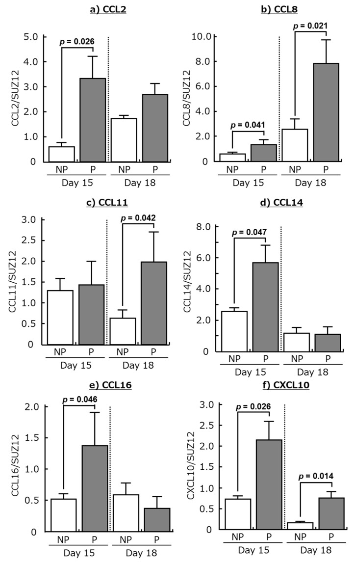 Changes in relative amounts of mRNA for ( a ) CCL2, ( b ) CCL8, ( c ) CCL11, ( d ) CCL14, ( e ) CCL16, and ( f ) CXCL10 in the endometrium at days 15 and 18 of non-pregnant cows (NP) and pregnant cows (P). Data are means ± SEM of four cows per stage and are expressed as relative ratios of the mRNAs to SUZ12 polycomb repressive complex 2 subunit (SUZ12). p -Values show significant differences between NP and P.