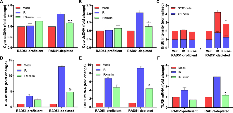 Inhibition of MRE11 exonuclease activity blocks the expression of innate immune response genes in RAD51-depleted cells. (A and B ) The quantification of ssDNA and dsDNA DNA in the cytosol. RAD51-proficient and -depleted cells were pre-treated with mirin (25 μM), irradiated with 2 Gy and harvested 8 h after irradiation. Subsequently, cells were subjected to sub-cellular fractionation and the amount of cytosolic ssDNA ( A ) and dsDNA ( B ) were quantified using OliGreen and PicoGreen Quant-iT reagents, respectively. The bars represent the changes in the cytoplasmic DNA concentration relative to respective mock-treated samples. Error bars represent STDEV from four independent experiments; *** P
