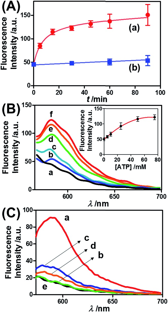 (A) Time-dependent release of TMR-D from the ATP-responsive hydrogel microcapsules treated with 50 mM ATP (a) and without added ATP (b). (B) Fluorescence spectra corresponding to the release of TMR-D upon exposing the microcapsules loaded with TMR-D to various concentrations of ATP for a fixed time interval of 30 min: (a) 0, (b) 5, (c) 10, (d) 25, (e) 50 and (f) 75 mM. Inset: derived calibration curve corresponding to the fluorescence intensities of the released TMR-D at λ em = 582 nm upon treatment with different concentrations of ATP. (C) Fluorescence spectra corresponding to the release of TMR-D upon the treatment of the ATP-responsive microcapsules with different nucleotide triphosphates for a fixed time interval of 30 min: (a) 25 mM ATP, (b) 25 mM TTP, (c) 25 mM CTP, (d) 25 mM GTP, and (e) untreated.