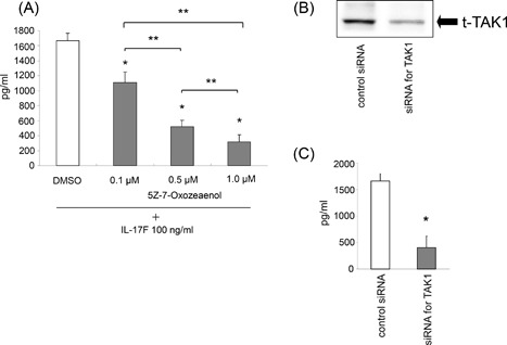 Effect of the inhibition for TAK1 on IL‐6 expression. ASMCs were pretreated with 5Z‐7‐Oxozeaenol (0.1, 0.5, and 1.0 µM) for 3 h before the 24 h‐stimulation of IL‐17F (100 ng/mL), and then IL‐6 protein levels in supernatants were measured by ELISA. The values are expressed as means ± SEM (n = 6). * P
