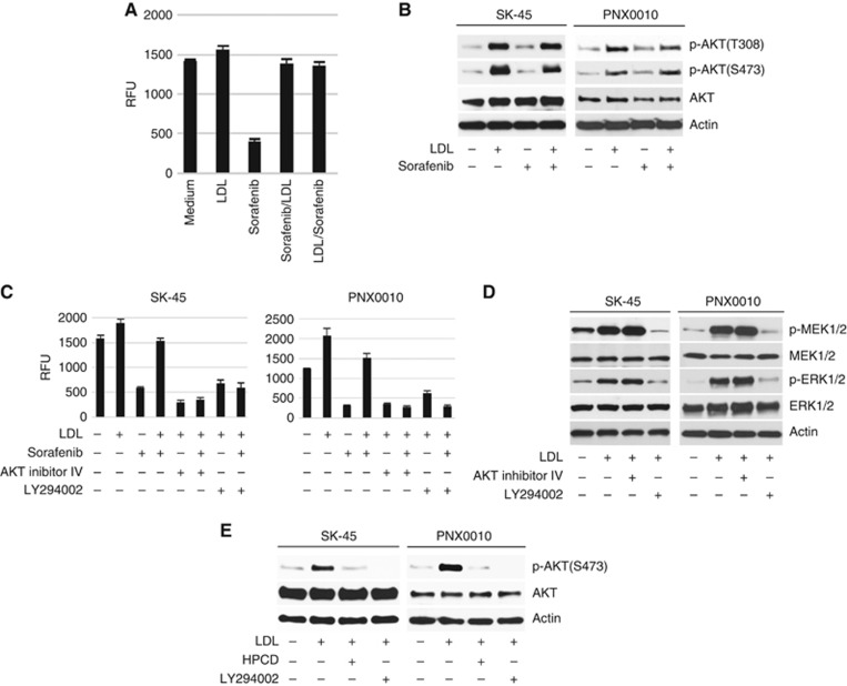 Inhibition of PI3K/AKT signalling enhances the antitumour efficacy of TKIs in the presence of LDL. ( A ) SK-45 cells were pre-treated with sorafenib (1 μ M ) for 3 h followed by the addition of LDL (100 μ g ml −1 ), or in the reverse order. Cell viability was analysed by CellTiter Blue assay. ( B ) Sorafenib does not affect LDL-induced activation of AKT. SK-45 cells were pre-treated with sorafenib (2.5 μ M ) for 1 h followed by the addition of LDL (100 μ g ml −1 ) for 1 h. ( C ) SK-45 and PNX0010 cells were pre-incubated with AKT inhibitor IV (1 μ M ) or PI3K inhibitor LY294002 (10 μ M ) for 1 h followed by incubation with sorafenib (1 μ M ) and/or LDL (100 μ g ml −1 ) for 72 h. Cell viability was analysed by CellTiter Blue assay. ( D ) The addition of LDL activates MEK/ERK signalling. SK-45 and PNX0010 cells were pre-incubated with AKT inhibitor IV (1 μ M ) or LY294002 (10 μ M ) followed by the addition of LDL (100 μ g ml −1 ) for 1 h. ( E ) The effect of HPCD on LDL-mediated AKT activation in RCC cells. SK-45 and PNX0010 cells were pre-treated with LDL (100 μ g ml −1 ) for 1 h followed by the addition of HPCD (10 m M ) for 2 h. LY294002 (10 μ M ) was used as a control in this experiment.