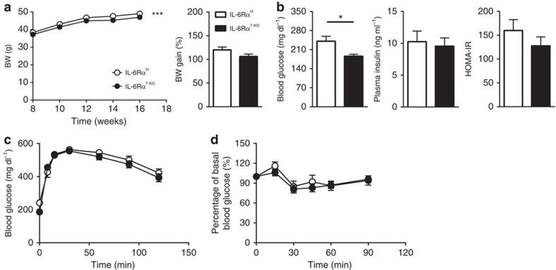 Physiological parameters and metabolic characterization of IL-6Rα T-KO mice (16-week HFD). ( a ) BW curve from 8 to 16 weeks on HFD and percentage of body weight gain ( n =22 versus 25). ( b ) Fasting (6 h) blood glucose ( n =22 versus 25), plasma insulin and HOMA-IR ( n =16 versus 19). ( c ) Blood glucose concentrations during IPGTT after a 6-h fast ( n =22 versus 25). ( d ) Blood glucose as a percentage of basal value during IPITT after a 2-h fast ( n =16 versus 21). Two-tailed t -tests and two-way analysis of variance (ANOVA) used for statistical analyses (* P