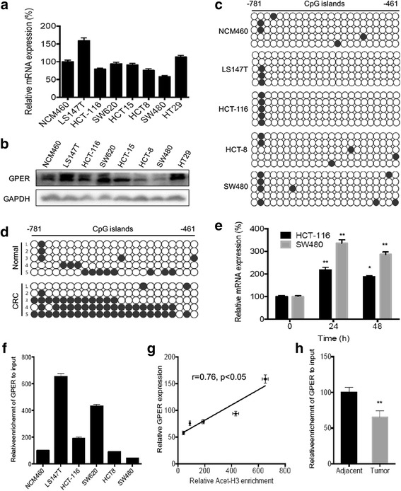 Promoter methylation and histone H3 deacetylation were involved in <t>GPER</t> down regulation in CRC cell and tissues. The mRNA ( a ) and protein ( b ) levels of GPER in CRC cell lines, human colon mucosal epithelial NCM460 cells were measured by qRT-PCR and western blot analysis, respectively; ( c ) Methylation status of GPER promoter in CRC cell lines was determined by bisulfite genomic <t>DNA</t> sequencing. Each dot represents a CpG site. White dots represent unmethylated CpG dinucleotides whereas each black dots represents a methylated cytosine residue within the CpG islands; ( d ) Methylation statuses of GPER promoter in five pairs of CRCs tissues and patient-matched normal tissues (Cohort 1) were determined by bisulfite genomic DNA sequencing; ( e ) HCT-116 or SW480 cells were treated with 5 μM 5-Aza for the different times, then mRNA of GPER was measured by use of qRT-PCR; ( f ) ChIP analysis of NCM460 and CRC cell lines were conducted on the GPER promoter regions by use of antiacetyl histone H3 antibody; ( g ) The correlation between relative acet-H3 enrichment and GPER mRNA expression in LS147T, HCT-116, SW620, HCT8, and SW480 cells; ( h ) ChIP analysis of five pairs of CRCs tissues and patient-matched normal tissues (Cohort 1) were conducted on the GPER promoter regions by use of antiacetyl histone H3 antibody. Data were presented as means ± SD of three independent experiments. * p