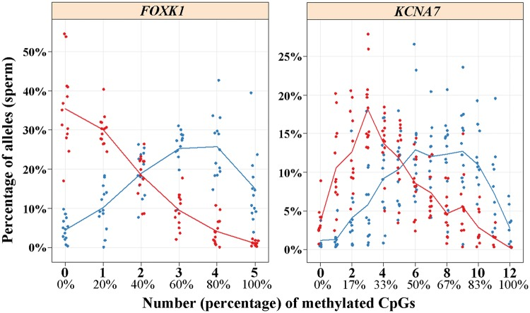 Distribution of single sperm (allele) methylation of FOXK1 (left diagram) and KCNA7 (right). Red dots represent sperm samples of older (40–55 years) and blue dots of younger (25–35 years) donors. The FOXK1 assay targets 5 and the KCNA7 assay 12 CpG sites. The Y axis indicates the percentage of reads (individual sperm) with 0, 1, 2, 3, 4 or 5 methylated CpGs for FOXK1 and 0–12 methylated CpGs for KCNA7 , respectively. Methylation measurements were performed using deep bisulfite sequencing. Average methylation values for the measured CpG sites are provided in Supplementary Material, Table S10 .