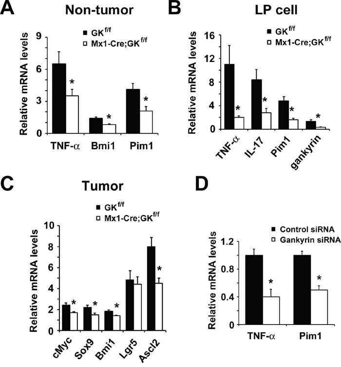 Loss of gankyrin in myeloid cells results in reduced expression of cytokines and stem cell markers A . RNA was extracted from non-tumor colon of tumor-harboring Mx1-Cre;Gankyrin f/f (Mx1-Cre;GK f/f ) mice and Gankyrin f/f (GK f/f ) mice. Relative amounts of mRNA were determined by real-time qPCR and normalized to the amount of actin mRNA. The amount of each mRNA in the untreated colon was given an arbitrary value of 1.0. Data are means ± SEM (n = 5). B . Effect of gankyrin on gene expression in colonic lamina propria (LP) cells. LP cells were isolated from DSS-treated Mx1-Cre;Gankyrin f/f (Mx1-Cre;GK f/f ) mice and Gankyrin f/f (GK f/f ) mice and cytokine mRNA expression was analyzed by real-time qPCR. The mRNA expression levels in LP cells from non-treated WT mice were set as 1. C . RNA was extracted from tumor tissues of Mx1-Cre;Gankyrin f/f (Mx1-Cre;GK f/f ) mice and Gankyrin f/f (GK f/f ) mice. Relative amounts of mRNA of ERK target genes cMyc, and stem cell markers Sox9, Bmi1, Lgr5 and Ascl2 were determined by real-time qPCR and normalized to the amount of actin mRNA. The amount of each mRNA in the untreated colon was given an arbitrary value of 1.0. Data are means ± SEM (n = 5). D . Relative amounts of mRNA of TNF-α and Pim1 from THP-1 cells transfected with gankyrin RNAi or control RNAi were determined by real-time qPCR and normalized to the amount of actin mRNA. The amount of each mRNA in the untreated colon was given an arbitrary value of 1.0. Data are means ± SEM (n = 3).