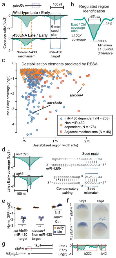 RESA identifies sequences that promote mRNA destabilization (a) Wild-type sequence coverage depletion over time (top) reveals two destabilization elements in the gdpd5a 3′UTR. 430LNA inhibits destabilization of only the miR-430 target (bottom). (b) Regulated regions are identified by searching for a ≥ 1.33 fold depletion in late versus early stages, within a ≥65-nt region with ≥100X sequencing coverage. (c) Biplot of RESA-predicted destabilization regions, separated by mode of regulation. (d) Wild-type coverage depletion around a canonical miR-430 6-mer site ( tbc1d25 ) and non-canonical seed mismatch site with 3′ compensatory pairing ( sgk3 ) (e) GFP reporter analysis of RESA-predicted regulatory element with different regulatory behaviors. GFP mRNA levels are assayed at early (2hpf; yellow circles) and late (8hpf; blue squares) stage by qRT-PCR and normalized to a control dsRed mRNA. Plot shows mean +/− SEM; **, P