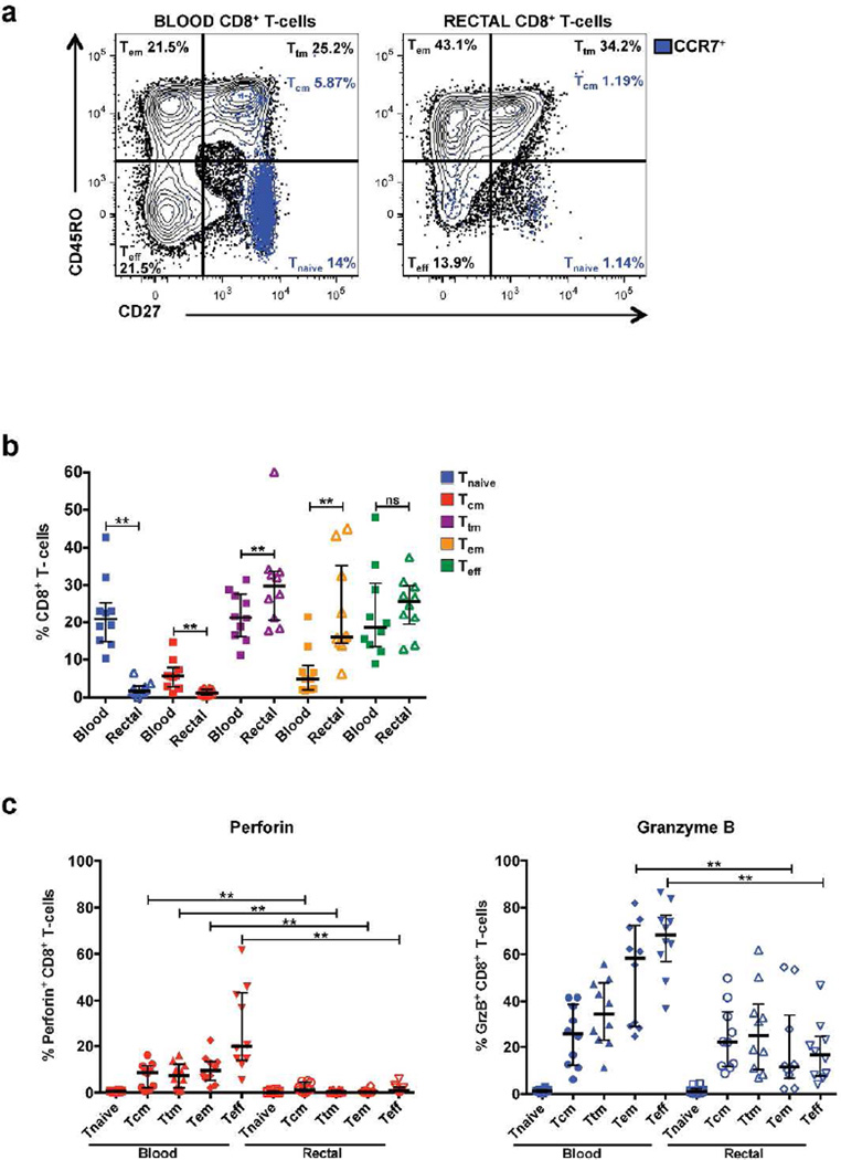 Reduced expression of perforin and GrzB in rectal mucosal CD8 + T-cell memory/effector populations compared to blood. (a) Representative flow cytometry plot displaying surface staining for the memory differentiation markers CD45RO, CD27, and CCR7 in blood and rectal CD8 + T-cells. (b) Frequency of memory/effector subsets within blood and rectal CD8 + T-cell populations in a consolidated group of HIV+ and seronegative participants. (c) Distribution of perforin and GrzB expression in blood and rectal CD8 + T-cell memory/effector subsets. Wide horizontal bars represent medians; narrow whiskers indicate interquartile ranges; asterisks indicate level of significance as follows: * P