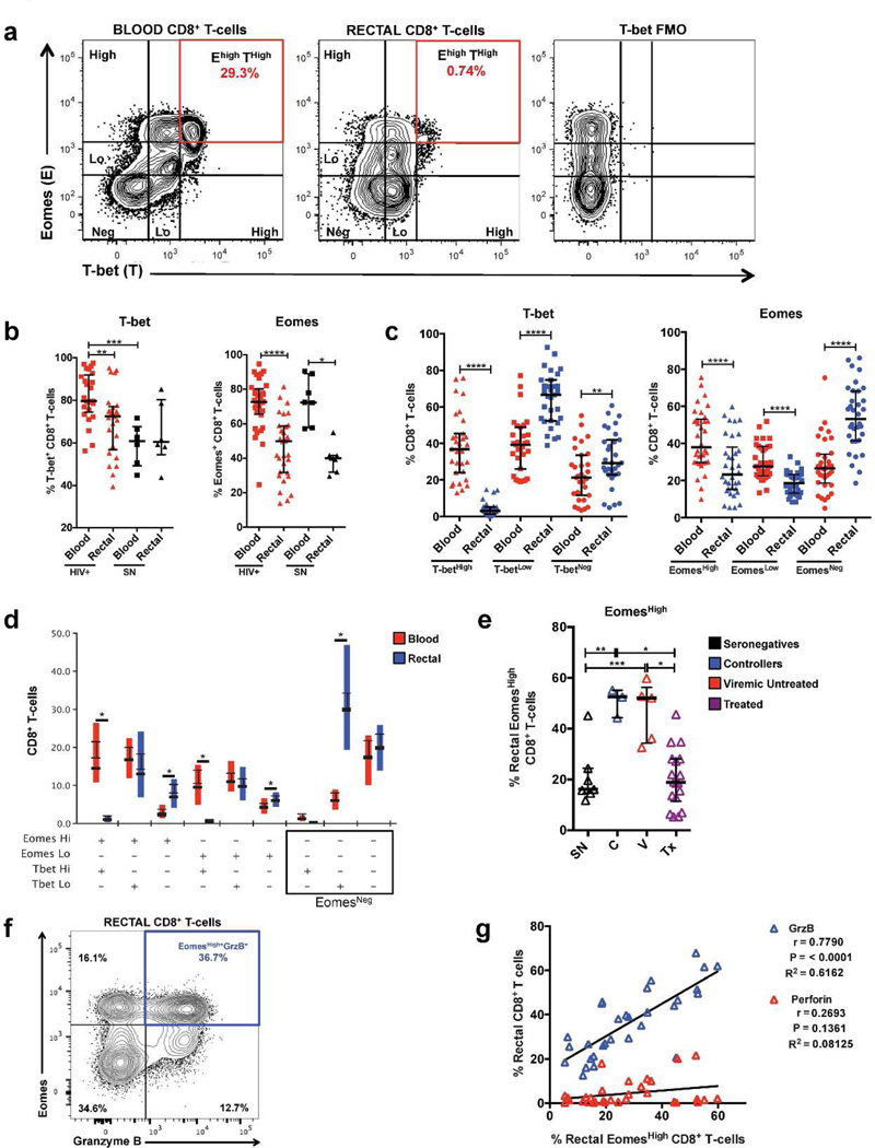 T-bet and Eomesodermin are differentially expressed in blood and rectal CD8 + T-cells. (a) Representative flow cytometry plot of data from a seronegative participant showing high and low fluorescence intensities of T-bet and Eomesodermin (Eomes) in blood and rectal CD8 + T-cells, highlighting the reduction in frequency of T-bet High Eomes High CD8 + T-cells in rectal mucosa compared to blood. (b) Differences in the frequencies of total T-bet + and Eomes + CD8 + T-cells between blood and rectal mucosa and between HIV + and seronegative participants. (c) Differences in the frequencies of CD8 + T-cells with T-bet and Eomes high and low expression intensities in blood and rectal mucosa. (d) Difference in T-bet and Eomes co-expression patterns in blood and rectal CD8 + T-cells. (e) Frequency of Eomes High CD8 + T-cells in rectal mucosa across HIV disease status. Similar results were observed in blood (data not shown). (f) Representative flow cytometry plot showing co-expression of Eomes High and <t>GrzB</t> in rectal mucosal CD8 + T-cells. (g) Spearman correlation analysis relating the frequency of Eomes High CD8 + T-cells with the frequency of CD8 + T-cells expressing perforin or GrzB in rectal mucosa. Wide horizontal bars represent medians; narrow whiskers indicate interquartile ranges; asterisks indicate level of significance as follows: * P