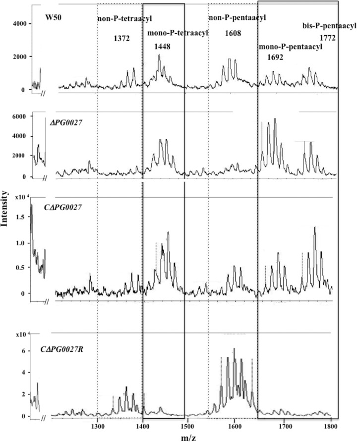MALDI-TOF MS analysis of lipid A from P. gingivalis W50, the Δ PG0027 mutant strain, and the C Δ PG0027 and C Δ PG0027R strains. Negative-ion MALDI-TOF MS was performed on lipid A samples with norharmane as the matrix as described in Materials and Methods. Boxes with solid lines represent the mono-P-tetraacyl, mono-P-pentaacyl, and bis-P-pentaacyl lipid A clusters, whereas boxes with dashed lines represent the non-P-tetraacyl and non-P-pentaacyl lipid A clusters.