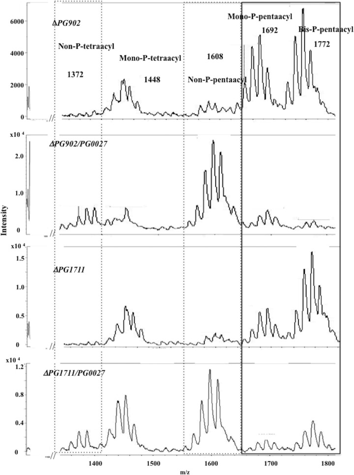 MALDI-TOF MS analysis of lipid A from the P. gingivalis Δ PG902 , Δ PG902 / PG0027 , Δ PG1711 , and Δ PG1711 / PG0027 mutant strains. Boxes with solid and dashed lines represent phosphorylated and nonphosphorylated species, respectively, as described in the legend to Fig. 4 .