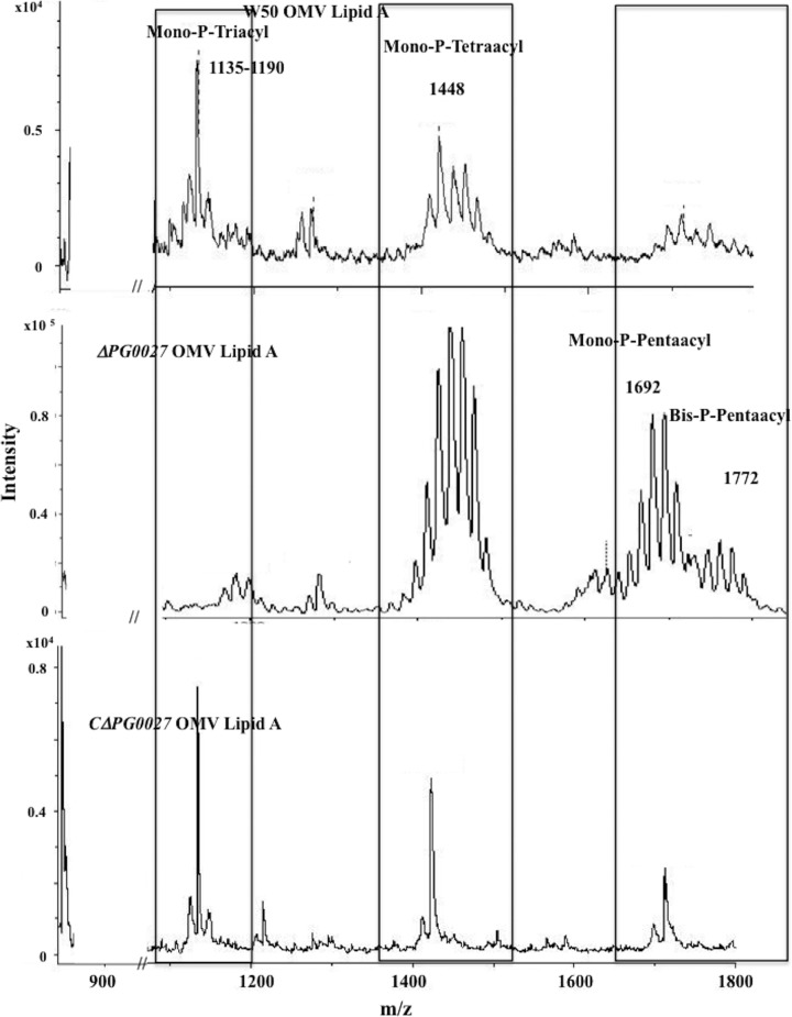 MALDI-TOF MS analysis of lipid A isolated from OMVs from P. gingivalis W50, the Δ PG0027 mutant strain, and the C Δ PG0027 strain. MALDI-TOF MS was performed in negative-ion mode as described in Materials and Methods. Boxes represent mono-P-triacyl, mono-P-tetraacyl, and phosphorylated-pentaacyl lipid A species.