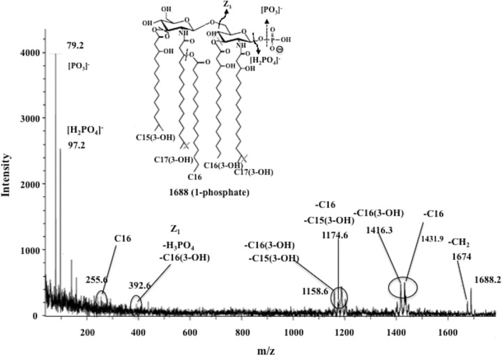 MALDI TOF/TOF tandem mass spectrum of m / z 1,688 of lipid A from the P. gingivalis Δ PG0027 mutant strain. Inset structures show the proposed phosphate positioning, and dashed lines and arrows indicate possible cleavage sites.