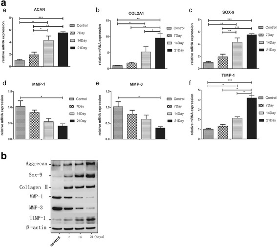 Extracellular matrix expression of degenerate NPCs after NPCs were stimulated by BM-MSC exosomes. a qRT-PCR analysis showed an increase in ACAN ( a ), COL2A1 ( b ), SOX-9 ( c ) and TIMP-1 ( f ) and a decrease in MMP-1 ( d ) and MMP-3 ( e ) mRNA expression with the time of stimulation by BM-MSC exosomes. * P